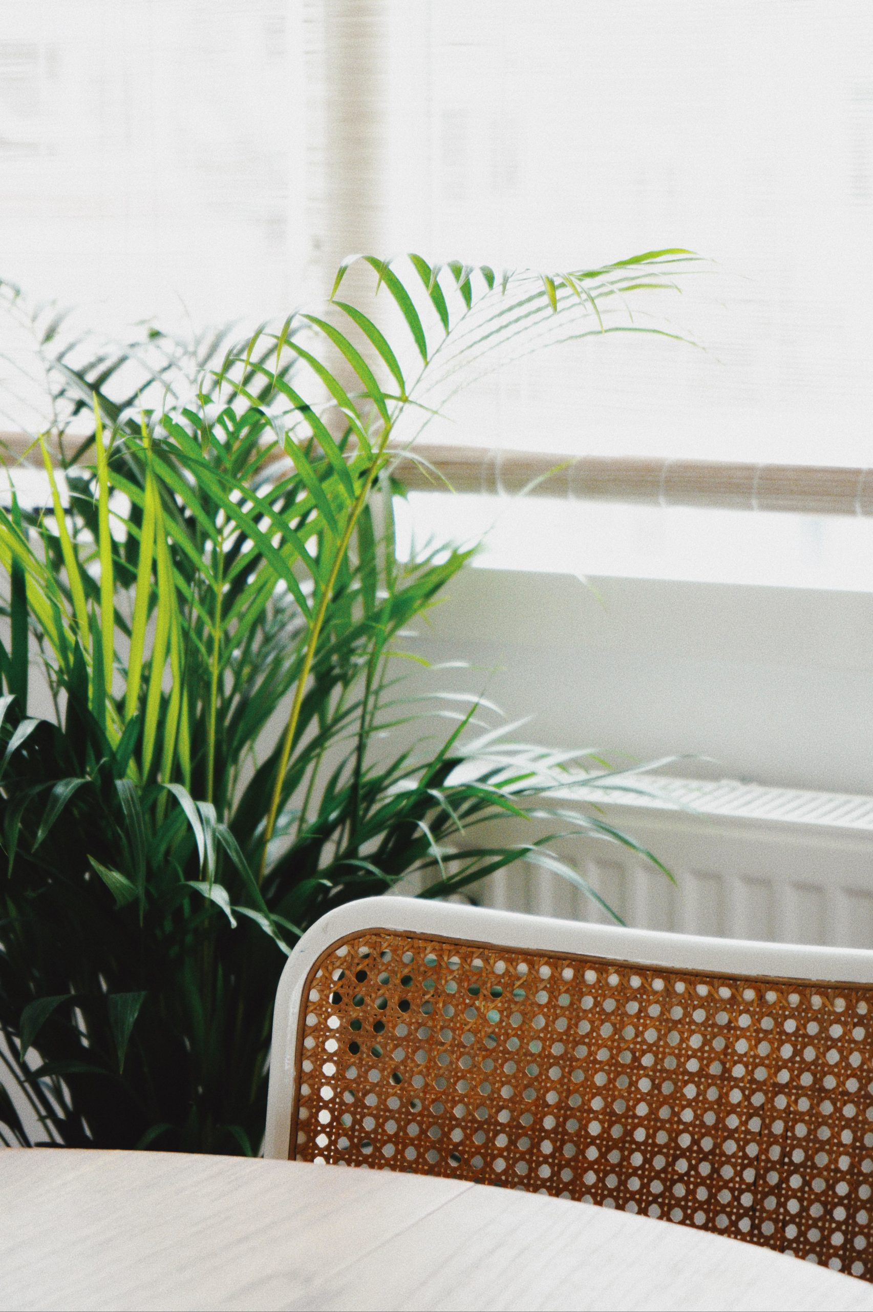 Stuhllehne und pflanze vor Fenster