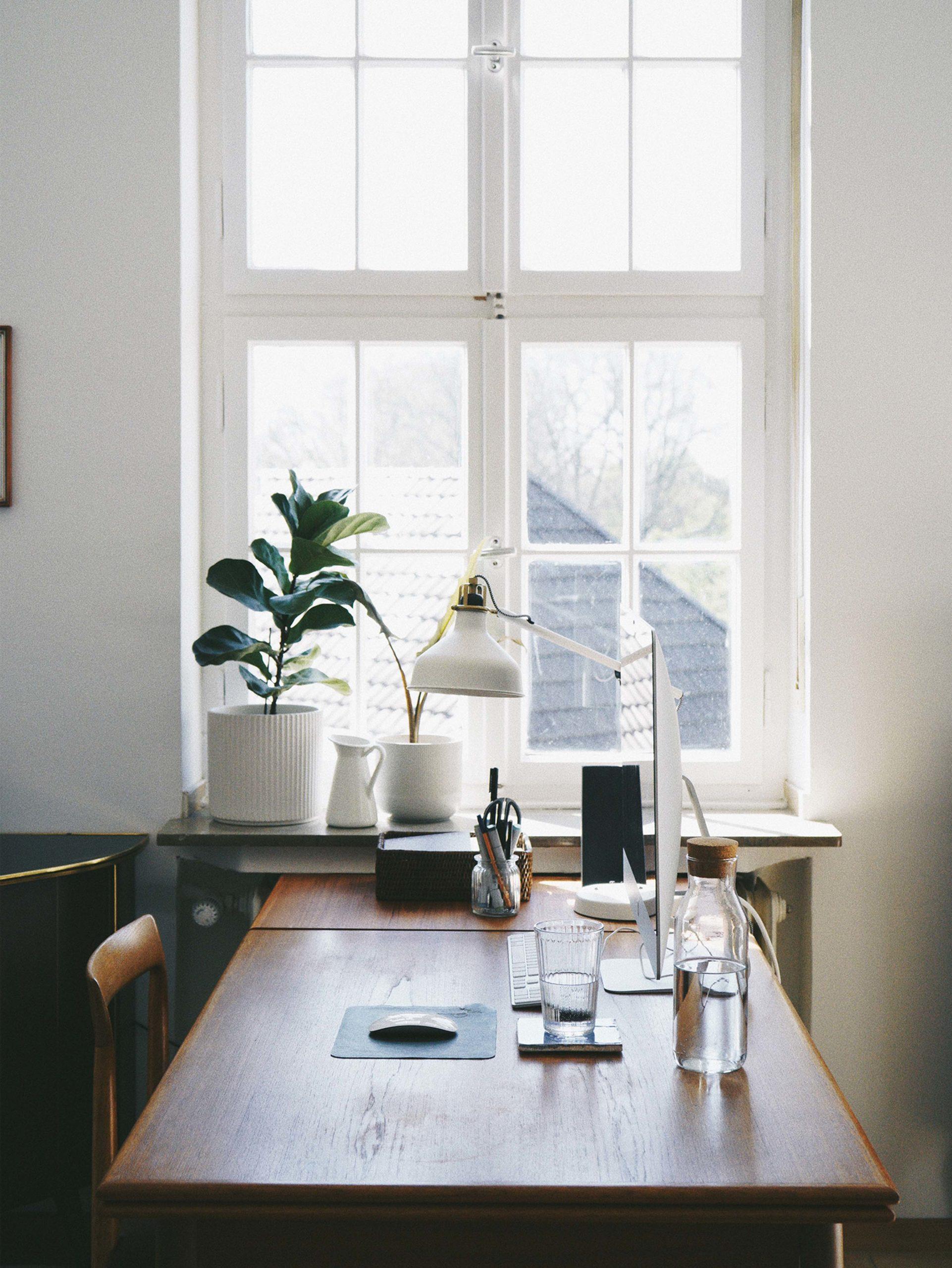 Schreibtisch Fenster Bildschirm Pflanzen